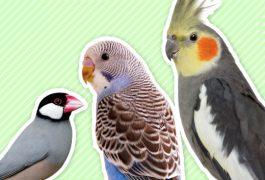 人気の小鳥紹介