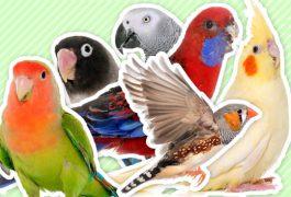 小鳥の種類・分類