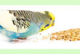小鳥の副食/危険な物