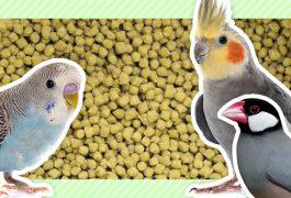 小鳥の主食〜ペレット
