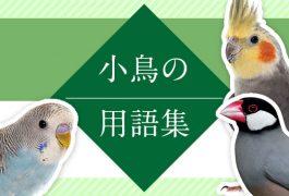 小鳥にまつわる用語集