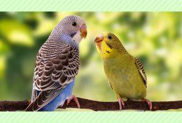 小鳥の成長