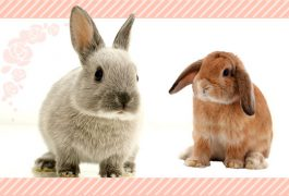 ウサギの基本