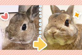 ウサギの成長