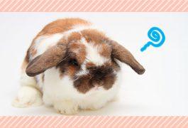 ウサギの病気・症状