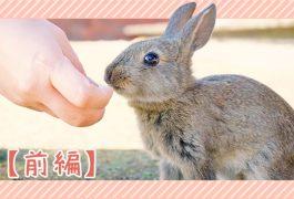 ウサギの感染症・前編