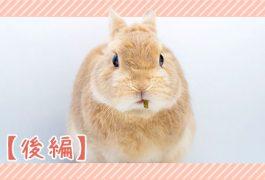 ウサギの感染症・後編